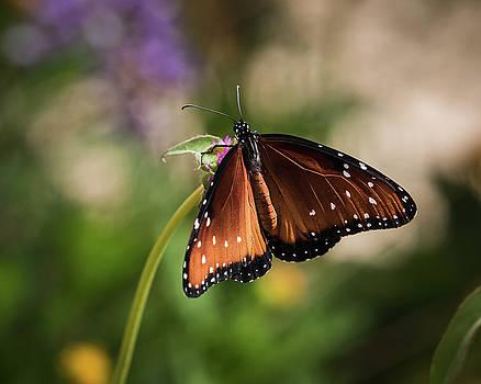 Rosemary Woods-Desert Rose Images - Queen Butterfly-IMG_680518