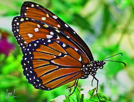 Queen Butterfly by S Lynn Lehman