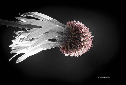 Queen medusa by Stwayne Keubrick