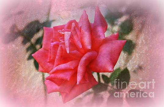 The  Rose That Last Forever by Sherri's Of Palm Springs