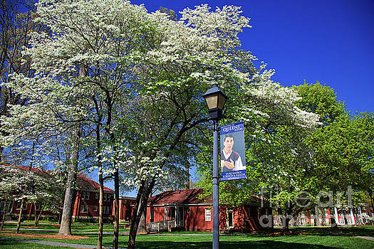 Jill Lang - Queens University in the Spring