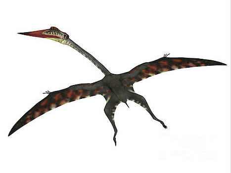 Quetzalcoatlus Flying Reptile by Corey Ford