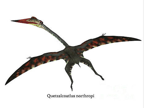 Corey Ford - Quetzalcoatlus Flying Reptile with Font