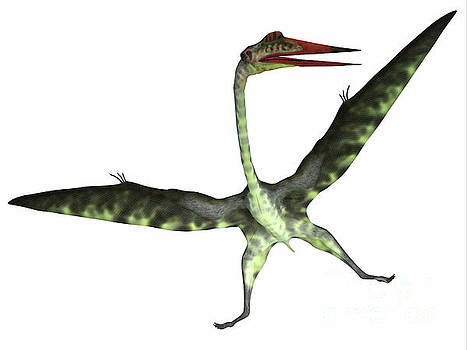 Quetzalcoatlus Reptile on White by Corey Ford