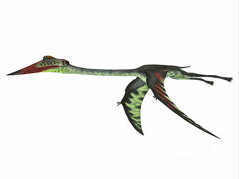 Corey Ford - Quetzalcoatlus Wings Down