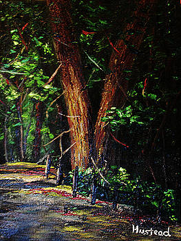 Quiet Forrest by Brian Hustead
