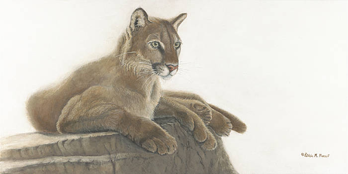 Quiet Intensity      Cougar by Patricia Mansell