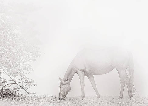 Quiet Mist by Sandra Silva