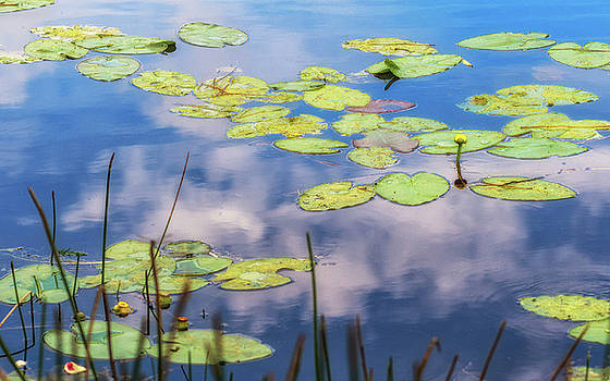 Quiet Reflections by Robin Zygelman