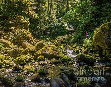 Quinault Rain Forest by Michael Tidwell