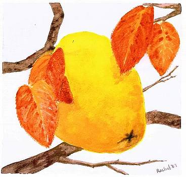Quince by Melanie Rochat