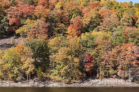 Bob Phillips - Quinnipiac River Color