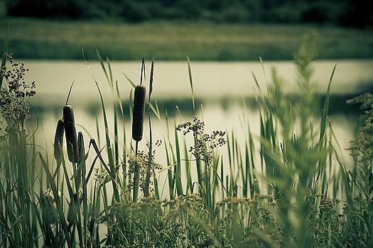 Quite Lake by Zina Zinchik