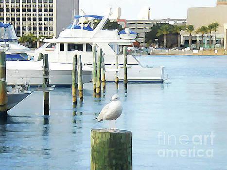 Quite Seagull by Vicki Allen