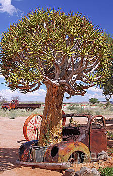 Quiver tree and old car, Namibia by Wibke W