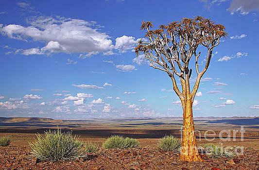 Quiver tree at the edge of Fish River Canyon, Namibia by Wibke W