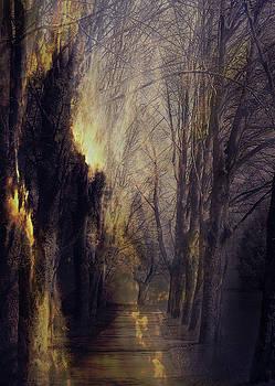 Quo Vadis  -  Memory Lane by AugenWerk Susann Serfezi