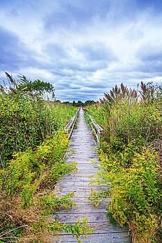 Quogue Goldenrod Walkway by Robert Seifert