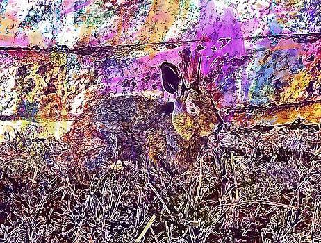 Rabbit Animal Wild Life Wild Brown  by PixBreak Art