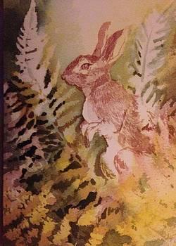 Rabbit in Ferns by Judy Osiowy