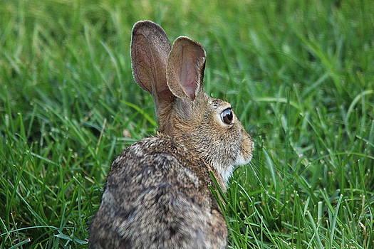 Rabbit In The Grass II by Jake Danishevsky