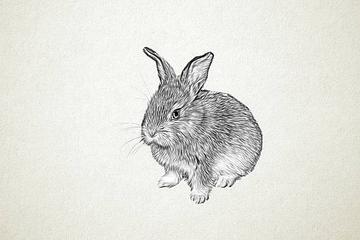 Rabbit by Tatiana Tyumeneva