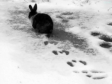 Alana  Schmitt - Rabbit Tracks
