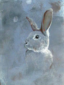 Rabbit Universe by Sarah Mushong