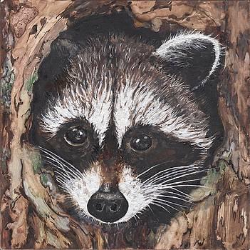 Raccoon Baby by Marla Saville