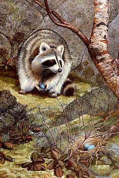 Frank Wilson - Raccoon Found Treasure
