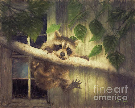 Raccoon Hangin' Around by Tim Wemple