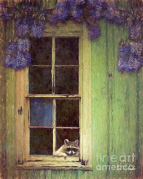 Raccoon Window by Tim Wemple