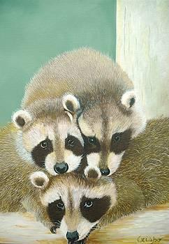 Racoons by Jean Yves Crispo