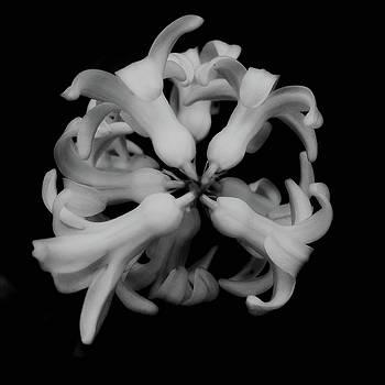 Radial by Marcus Hammerschmitt