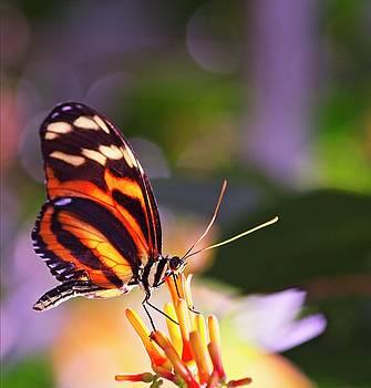 Garvin Hunter - Radiant Beauty