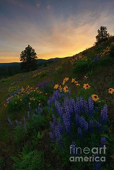 Radiant Gardens by Mike Dawson