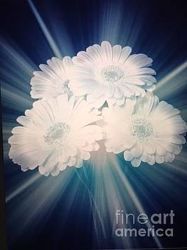 Radiant Gerbera Daisies by Jeannie Rhode