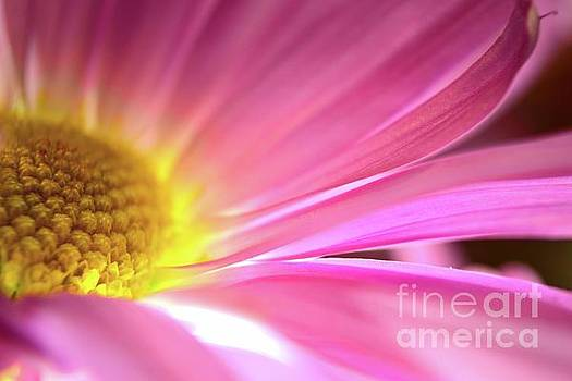 Radiant Glory by Chad and Stacey Hall