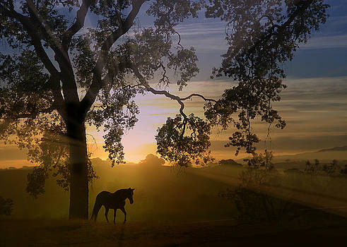 Radiant Horse and Sunrise with Beautiful Oak Tree by Stephanie Laird
