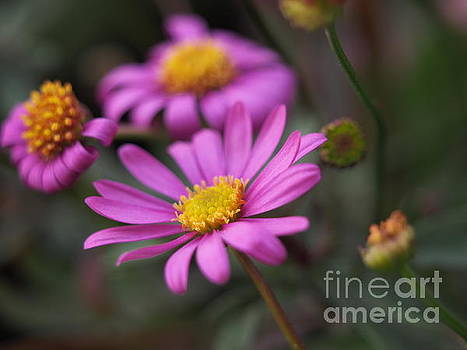 Radiant Magenta In The Cool Garden Shadows 2 by Dorothy Lee