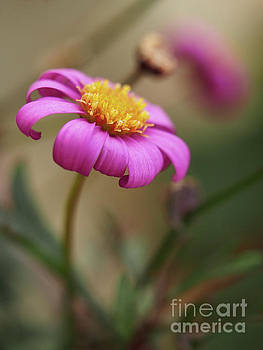 Radiant Magenta In The Garden by Dorothy Lee