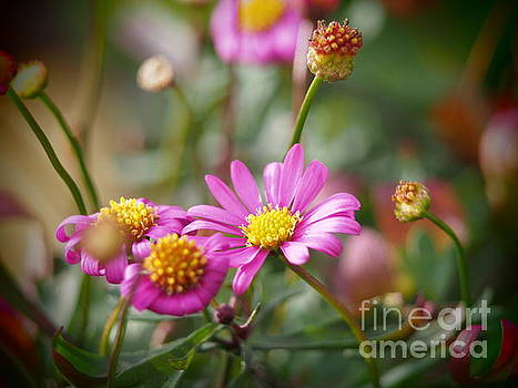Radiant Magenta In The Garden Shadows 2 by Dorothy Lee