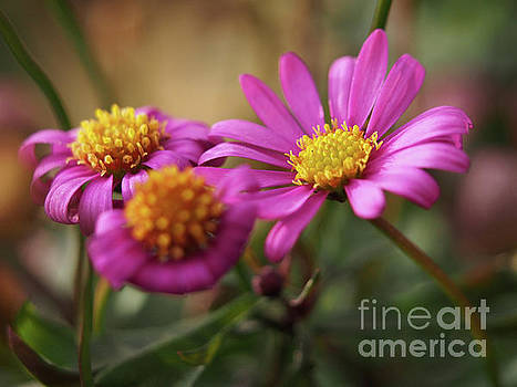 Radiant Magenta In The Garden Shadows 3 by Dorothy Lee