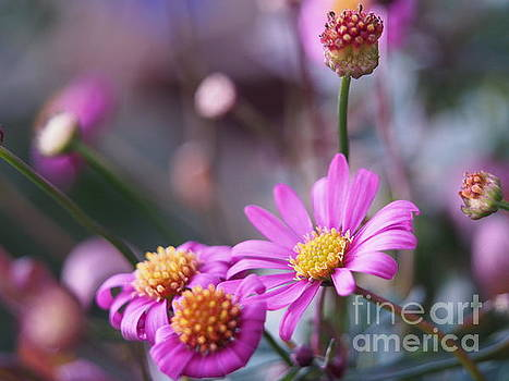 Radiant Magenta On A Cool Spring Day by Dorothy Lee