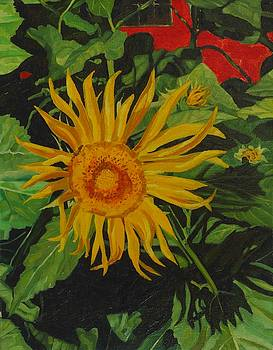 Radiant Sunflower by Phil Chadwick