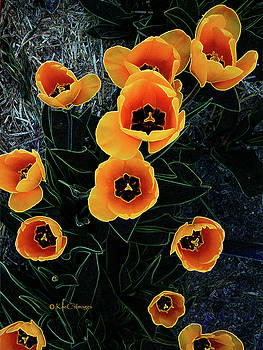 Radiant Tulips by Kae Cheatham