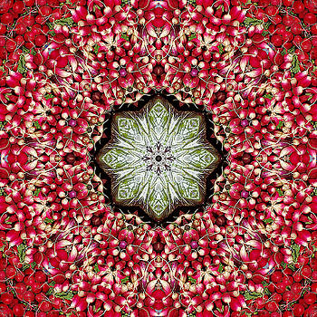 Radiating Radishes Mandala with Lettuce Accent by R V James
