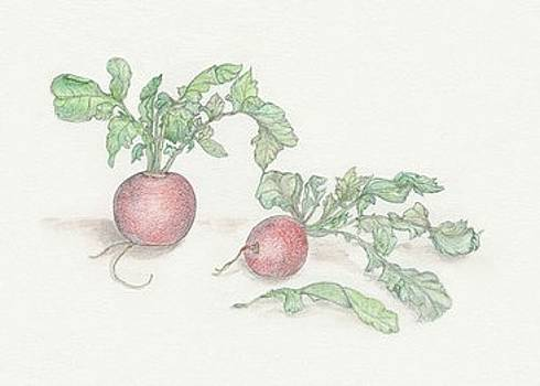Radishes by Tara Poole