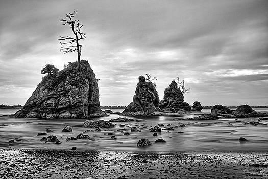 Jedediah Hohf - Ragged Beach Tree
