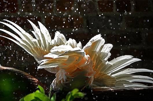 Rain Dance by Charlotte Schafer